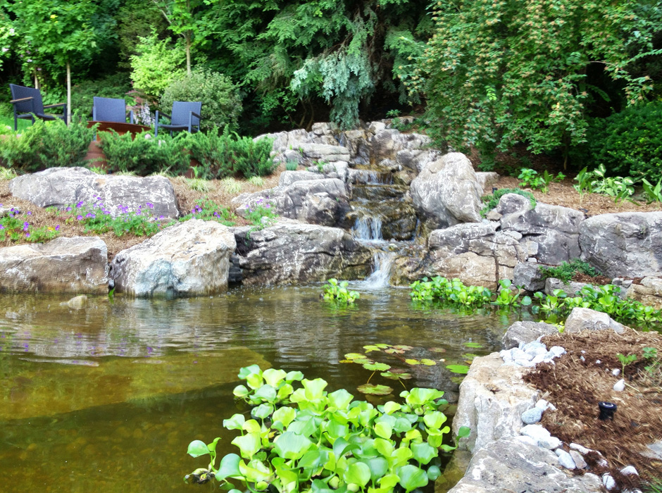 Is a backyard pond an ecosystem 28 images backyard for Garden pool ecosystem